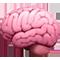 brain-portfolio